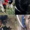 Shocking Video Shows Private Security Forces Unleashing Attack Dogs On Peaceful Pipeline Protestors